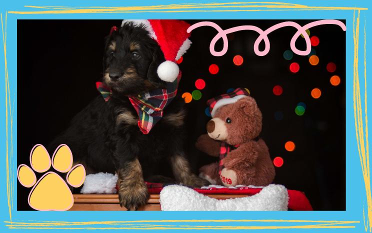 Czym się różni pies od zabawki?